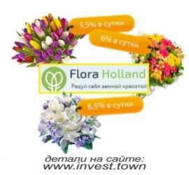 Flora Holand 270-250
